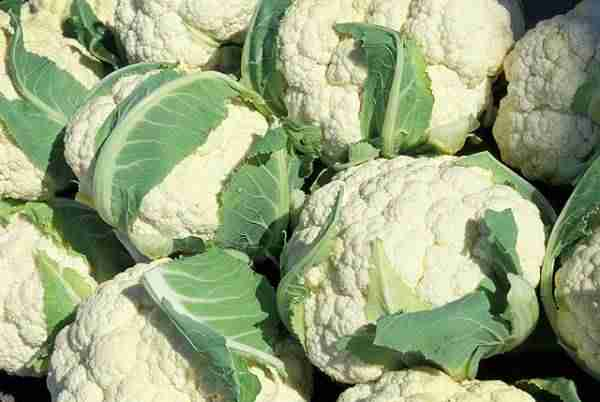 picture of cauliflowers