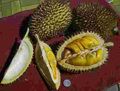 picture of durians
