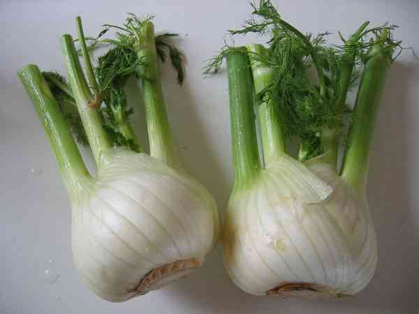 picture of fennel bulbs