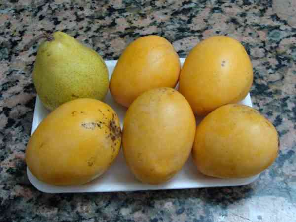picture of mangoes